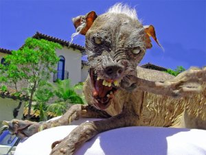 Sam, World's Ugliest Dog